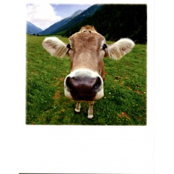 12-028 - TAURUS - POLA CARD