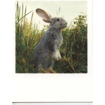 12-236 - TAURUS - POLA CARD