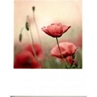 12-054 - TAURUS - POLA CARD