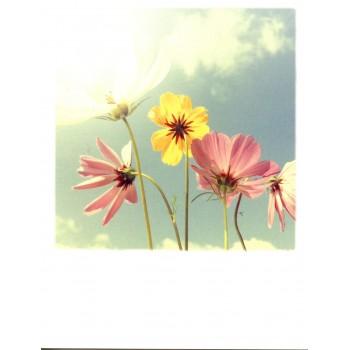 12-337- TAURUS - POLA CARD